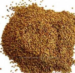 Семена люцерны 0, 5кг для проращивания