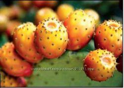 Настоящее масло кактуса-опунции в ассортименте  от 10 мл. Марокко