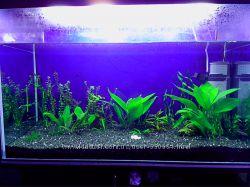 грунт для акваріума чорно-білий темний 2-4мм