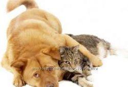 Нужна помощь в организации ветеринарной помощи бездомным животным