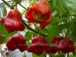 Семена перца колокольчик и много других экзотических семян