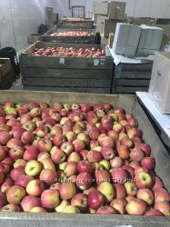 Свежие яблоки оптом от 50 кг. до 5000 тон