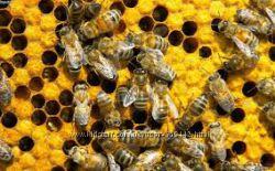 Продам пчело - семьи