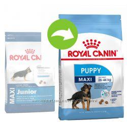 Сухой корм для щенков Royal Canin Maxi и Medium Junior