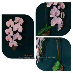 Орхидея из фоамирана, ручная работа.