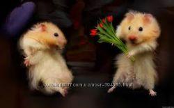 ЭксклюзивСтихи к празднику  Лучшее признание в любви