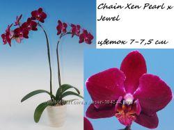 Орхидеи фаленопсисы ч 7