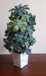 Ялинка із живих рослин сукулентів