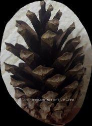 Шишки натуральные, для творчества, pinus svlvestris Цвет коричневый, натура