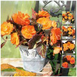 Цветы на даче какие лучше всего посадить