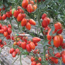 Вкуснотека индетерминатных гибридов вкусных томатов