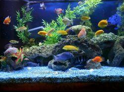 Чистка ваших аквариумов от 200 литров