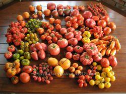 Семена томатов, перцев, баклажанов и других овощей из домашней коллекции.