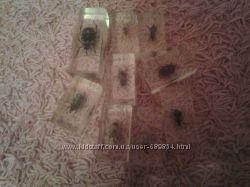продам насекомые их знакомые скуби ду трансформеры