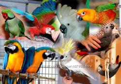 Аренда животных на  теле съемки, фотосессии, корпоративы и праздники