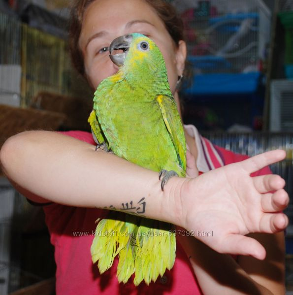 Говорящий большой самый умный попугай Амазон