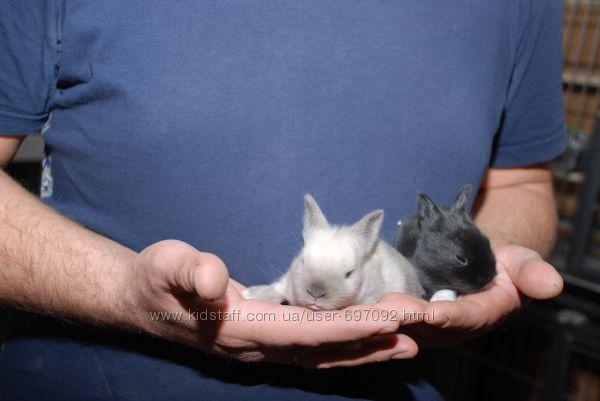 Декоративные кролики Мини - для любимой