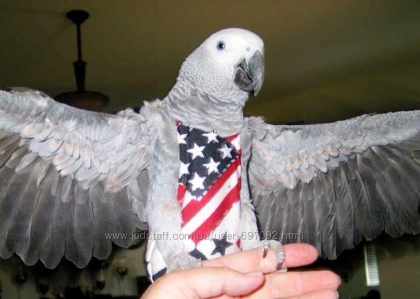 Одежда - памперс для попугаев