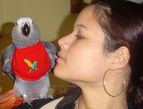 Одежда против ощипа у попугаев. Защитные костюмы от самоощипа у попугая