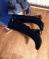 Сапоги демисезон черные, лаковый носок