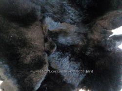 Натуральный мех Кролик черный стриженый.