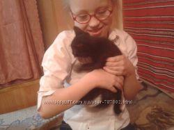 ТЕРМІНОВОЧорний нібелунг котик -хлопчик 2міс.