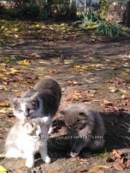 Пухнасті Кошенята та два кота терміново
