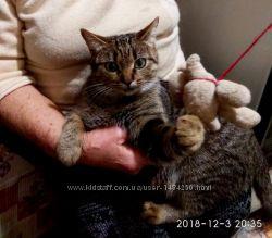 Отдам в хорошие руки кошку Ника-грозу крыс и мышей на вашем подворье
