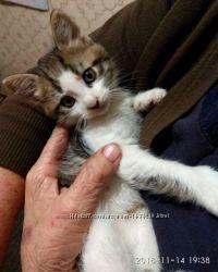 Отдам в хорошие руки 2-х месячного котёнка Амурчик