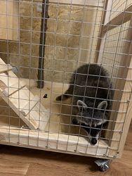 Изготовление продажа клетка вольер для енот шиншила и других животных